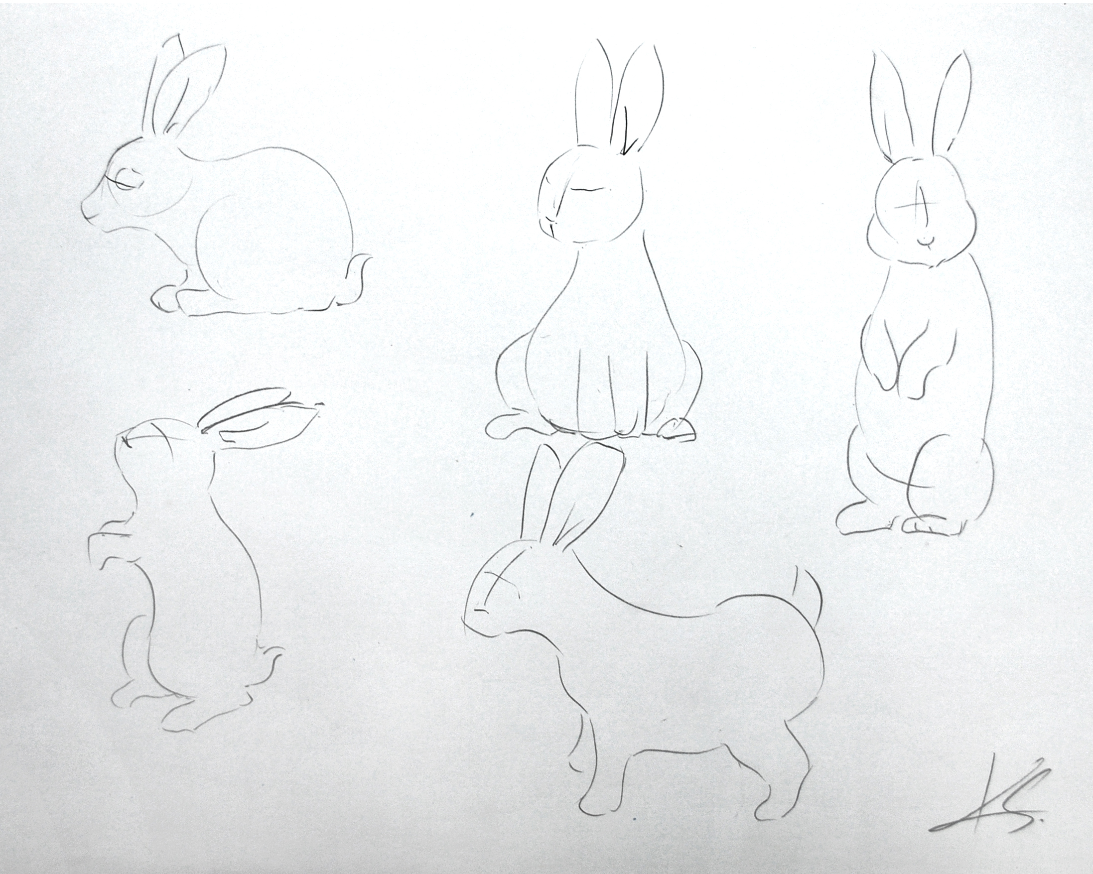 Initial Rabbit Sketches